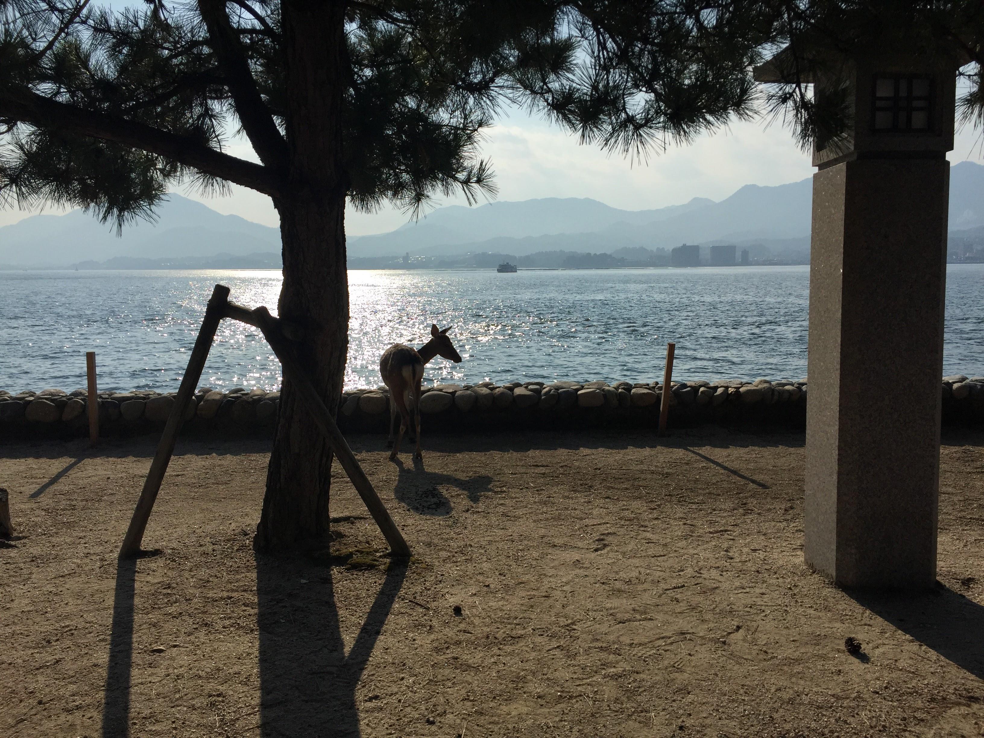 Miyajima sea side