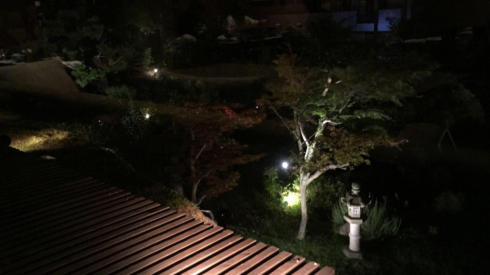 Night garden view