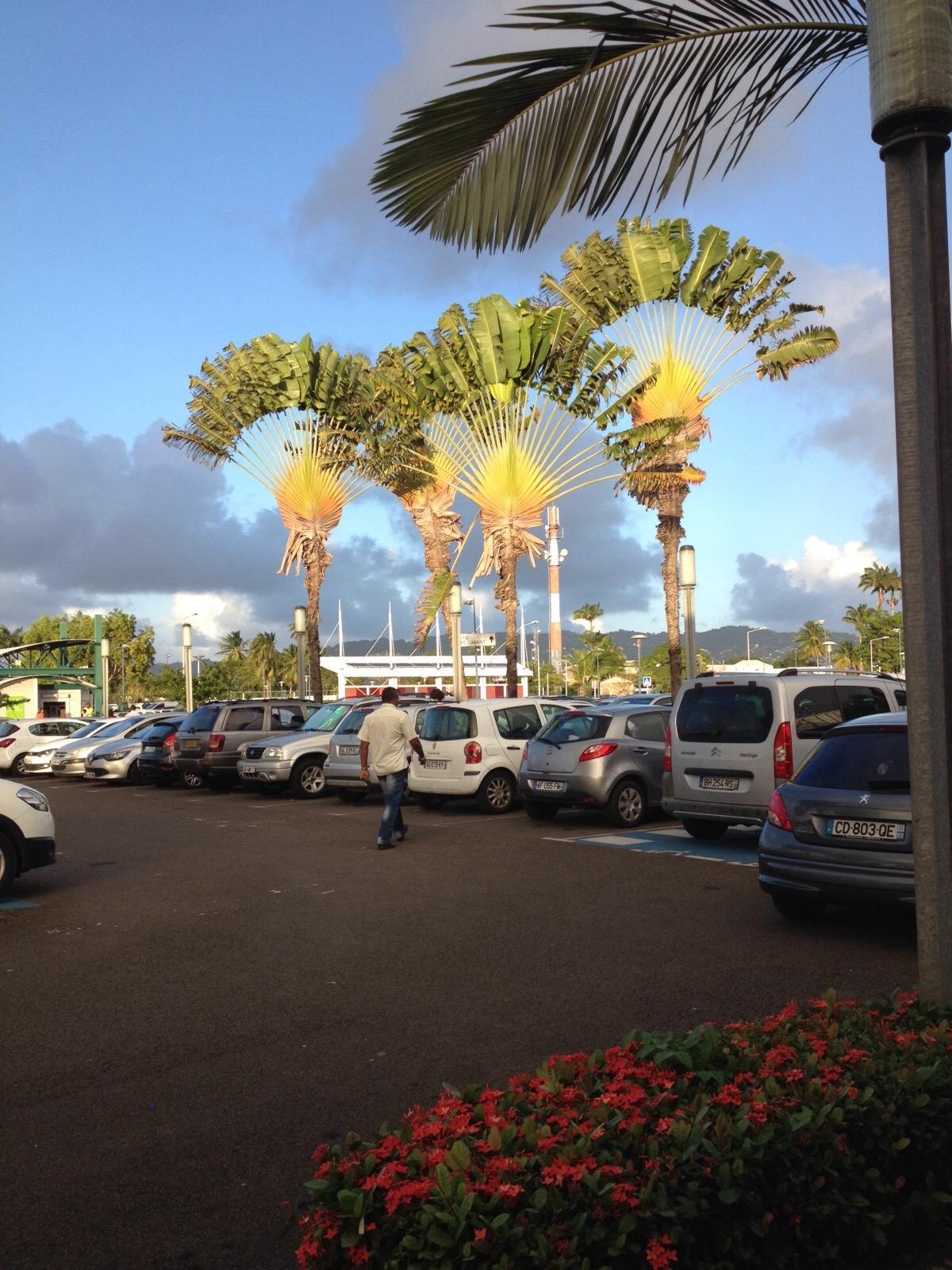 Devant l'aéroport Aimé Césaire